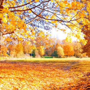 Marigold-Autumn-update